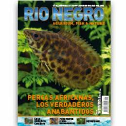 Rio Negro nº 28