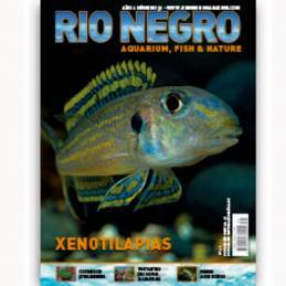 Rio Negro nº 31
