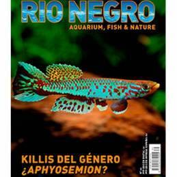 Rio Negro nº 35