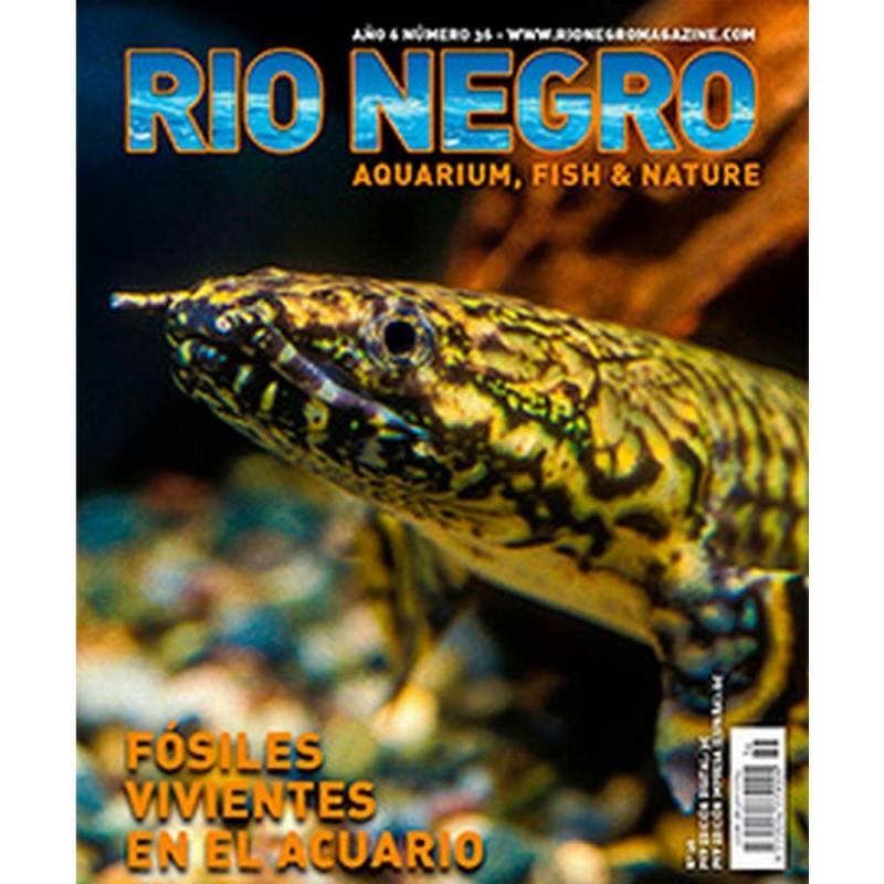 Rio Negro nº 36