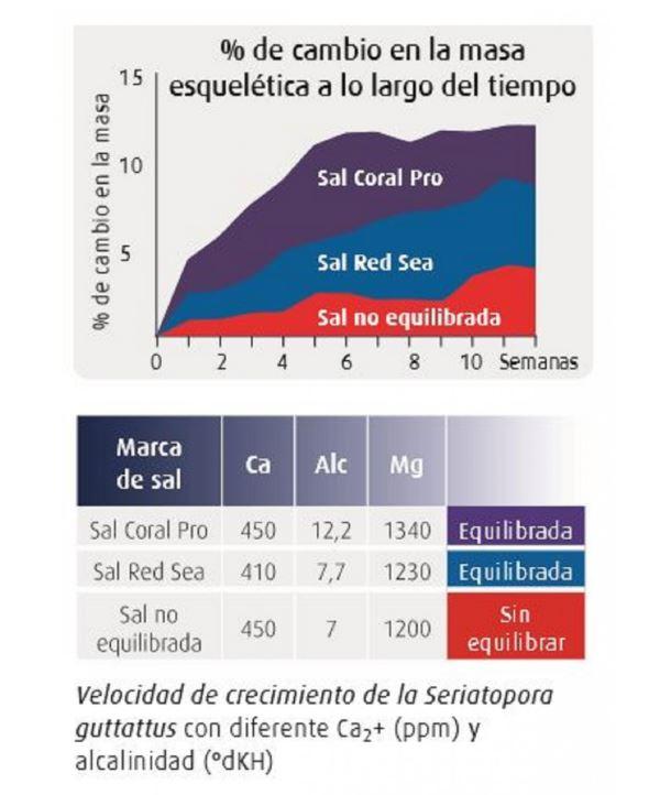 red sea sal