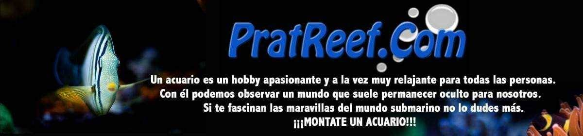 pratreef